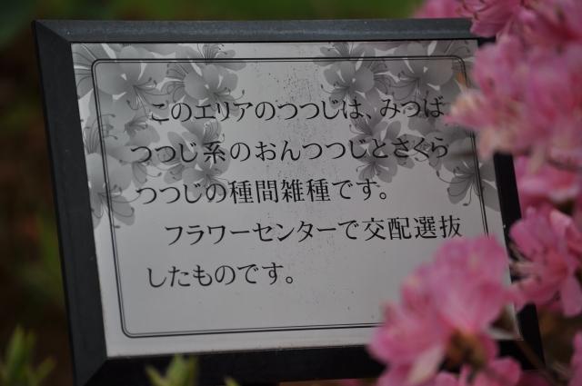 20120430_120.jpg